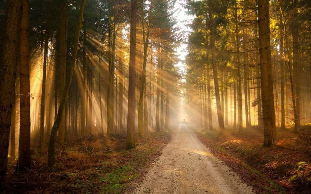 nature-trees-forest-path-sunlight-hd-resolution